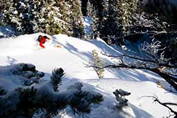 Backcountry Ski Experts